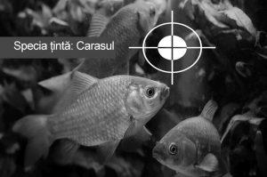 specie tinta la pescuit selectie caras la feeder