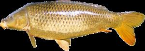 pescuit la feeder la crap in apa rece
