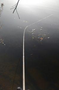 pescuit la feeder pe apa rece cu soare